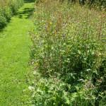 Mien Ruys Geranium phaem and wildflowers