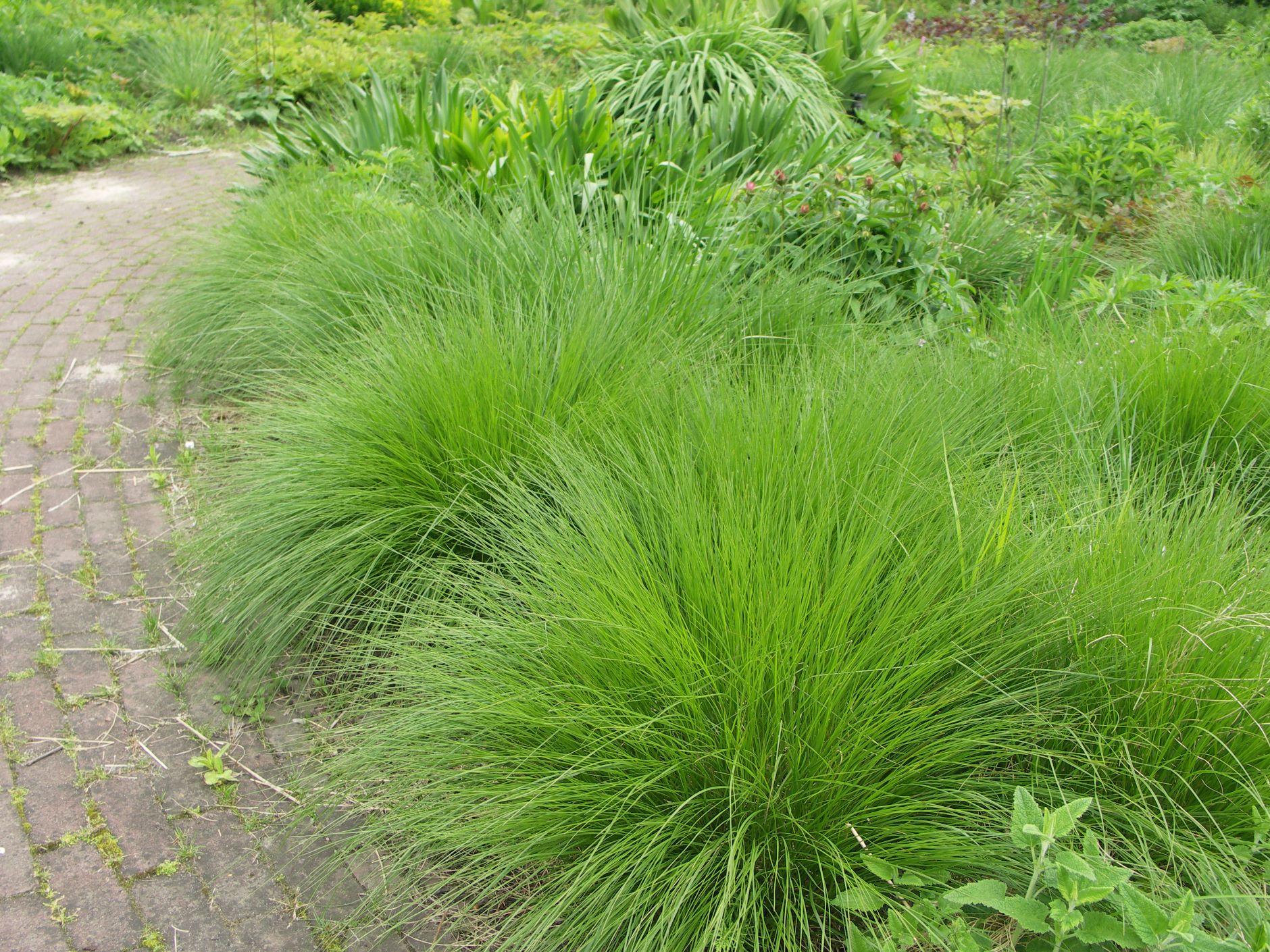 Grasses Archives Leaf Amp Acre