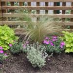 Heucheras, geraniums and Stipa