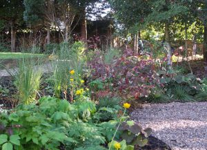 Bog garden at edge of woodland garden Whetstone