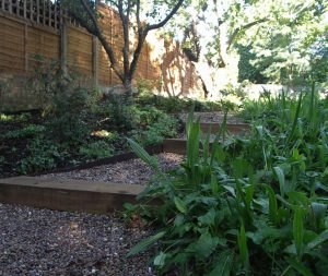 Dappled shade and meadow plants in woodland garden Whetstone
