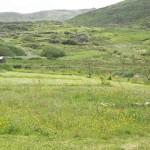 Meadow and Grass Kerry Marine Garden
