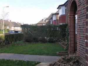 Uninteresting front lawn