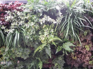 Detail of planting in the living wall