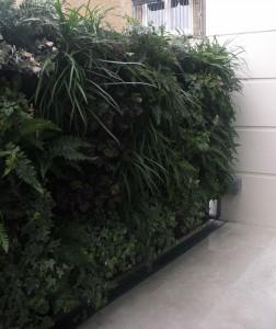 Carpet of lush planting on living wall